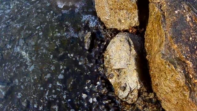adria-küste-krabbe - tierisches exoskelett stock-videos und b-roll-filmmaterial