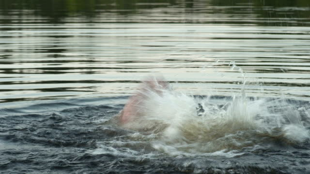 adult drowning - drowning stock videos and b-roll footage