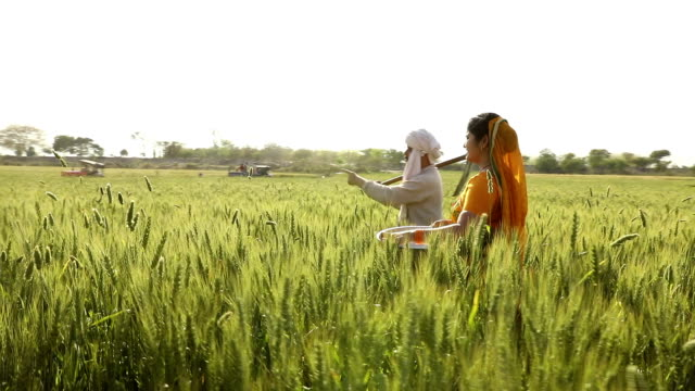 adult man and adult woman talking in the farm, haryana, india - headdress stock videos and b-roll footage