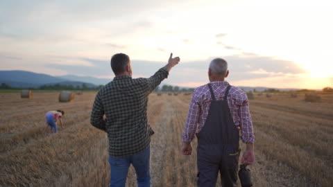 vidéos et rushes de fils adulte parlant à son fermier de père tout en examinant la récolte sur un champ agricole - agriculteur