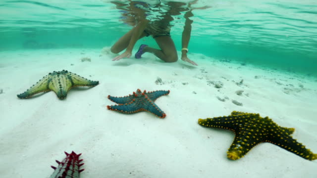 vídeos de stock e filmes b-roll de adult woman enjoying snorkeling next to variety of tropical starfish - biologia