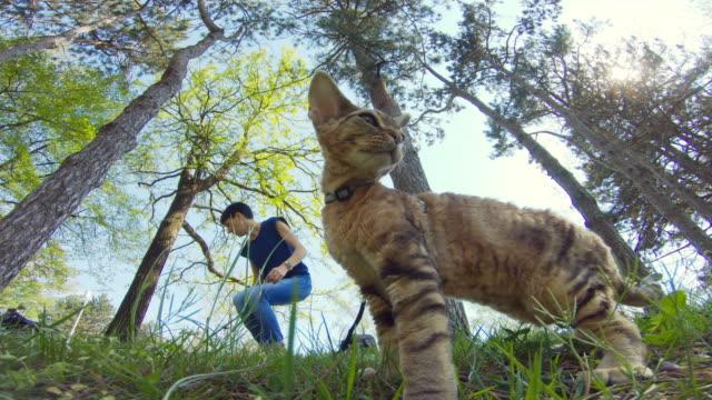 adult woman in public park with her devon rex cat on pet leash - pet leash stock videos & royalty-free footage