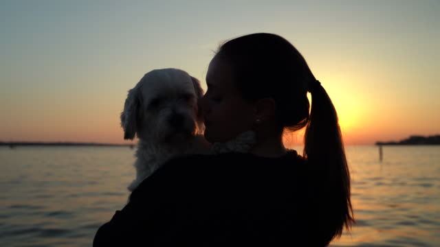 adult woman kissing her dog and looking at sunset - licking stock videos & royalty-free footage