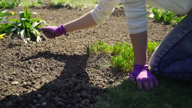 adult woman smoothening garden soil - gardening glove stock videos & royalty-free footage