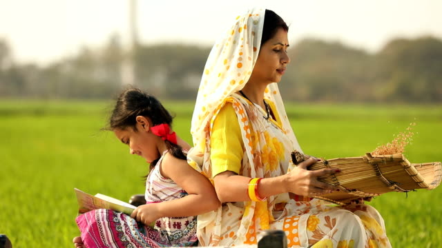 adult woman winnowing wheat in the farm, haryana, india - haryana stock-videos und b-roll-filmmaterial