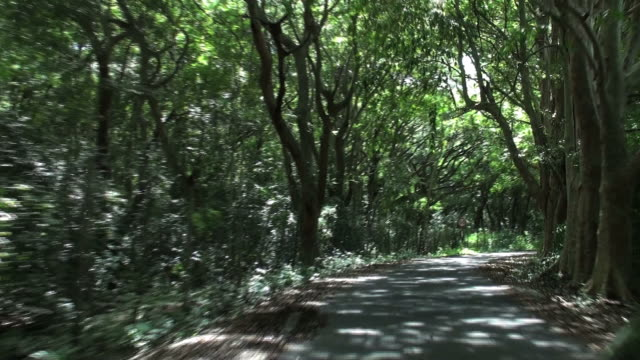 stockvideo's en b-roll-footage met adventurous drive on impressive avenue of calvaria trees - boulevard