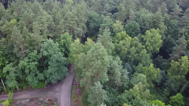 aerail view of the mass forest clearance place is seen in otomin, poland on 8 july 2021 environmentalists are alarming that the polish state forests,... - ポピュリズム点の映像素材/bロール