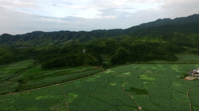 aeral view of lotus field in guangchang county in fuzhou city - organismo vivente in acque stagnanti video stock e b–roll
