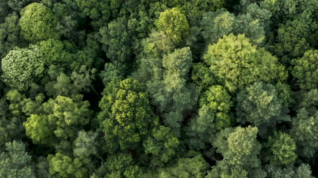 aerial 360 looking down on woodland canopy - copertura di alberi video stock e b–roll