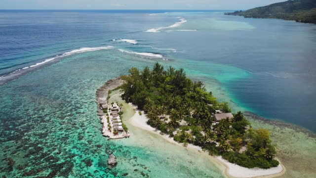 aerial: a small island with vacation huts and palm trees in the crystal clear water in moorea - moorea stock videos & royalty-free footage