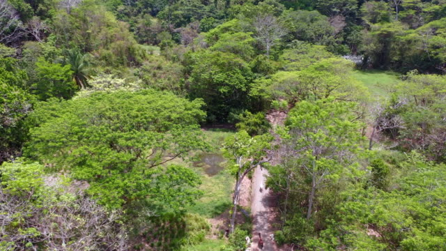 aerial: a team of horses walks under the cover of tropical trees on a dirt road in lush mountains - highlands, costa rica - costa rica stock videos & royalty-free footage