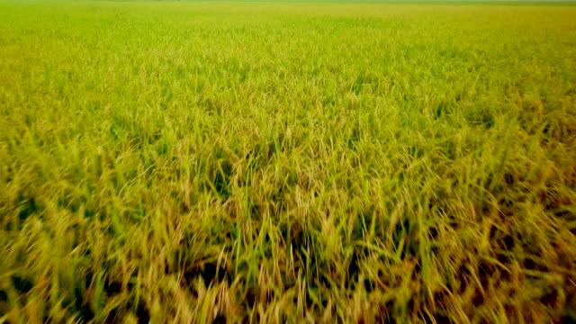 vídeos de stock, filmes e b-roll de antena acima das folhas frescas do campo verde - baixo posição