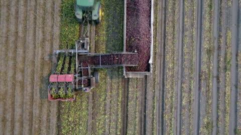 vídeos y material grabado en eventos de stock de aerial action - beetroot harvest - arar