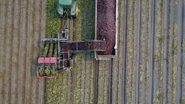 aerial action - beetroot harvest - tractor stock videos & royalty-free footage