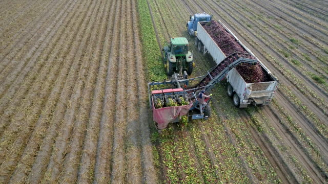 aerial action - beetroot harvester low orbit - bewässerungsanlage stock-videos und b-roll-filmmaterial