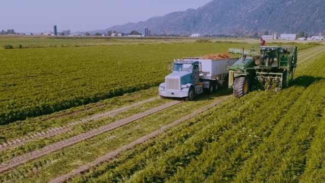 aerial action - carrot harvester approaching - kanada stock-videos und b-roll-filmmaterial