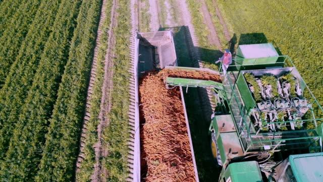 aerial action - carrot harvesting in the fraser valley - kanada stock-videos und b-roll-filmmaterial