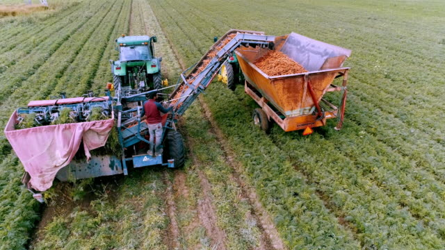 aerial action - close action rear view of a small carrot harvester in action - kanada stock-videos und b-roll-filmmaterial