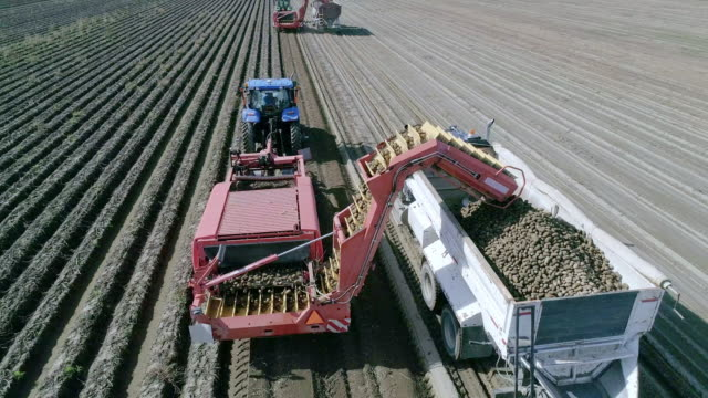aerial action - potato harvester at work - cultivated stock videos & royalty-free footage