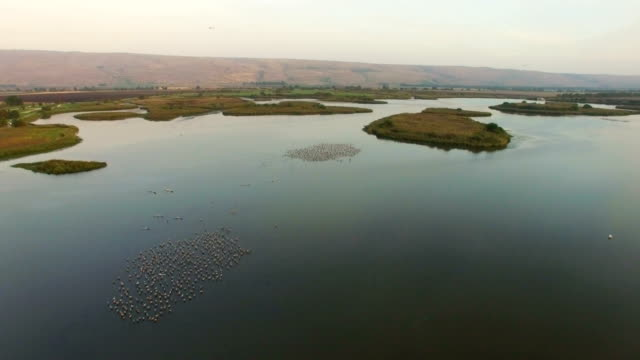 aerial/ air to air  flying alongside with common cranes in the hula valley, after sunset - クロヅル点の映像素材/bロール
