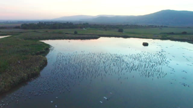 aerial/ air to air  flying alongside with common cranes in the hula valley - クロヅル点の映像素材/bロール