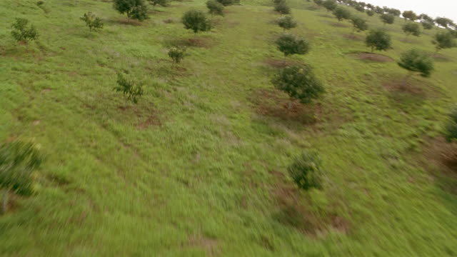 aerial aircraft point of view flying low over cultivated trees on tree farm / flying higher / veracruz, mexico - reforestation stock videos and b-roll footage