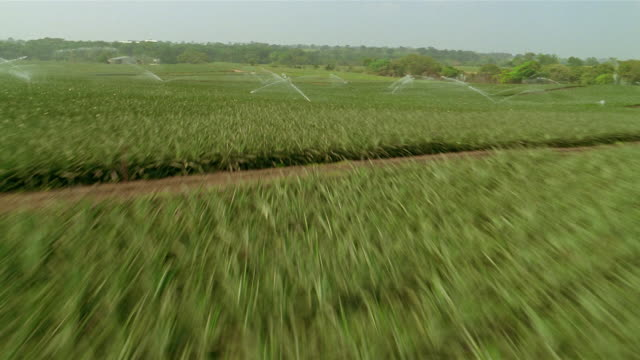 aerial aircraft point of view flying low over fields being irrigated on farm / veracruz, mexico - attrezzatura per l'irrigazione video stock e b–roll