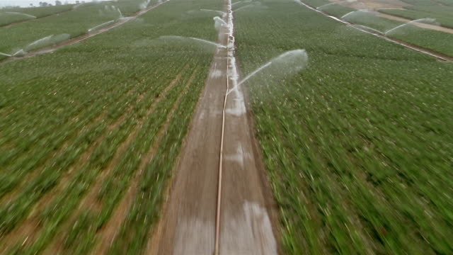 aerial aircraft point of view flying over field being irrigated on farm / flying up / veracruz, mexico - bewässerungsanlage stock-videos und b-roll-filmmaterial