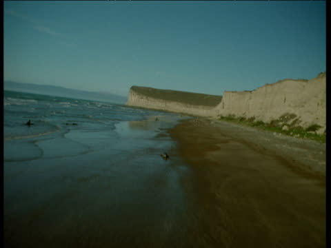 aerial along beach and coast over elephant seals and flock of seabirds - elefante marino del sud video stock e b–roll