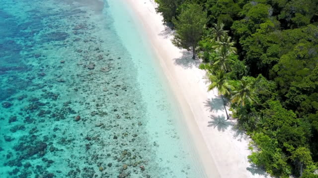 aerial: amazing lush green tropical beach, raja ampat islands, indonesia - indonesia video stock e b–roll