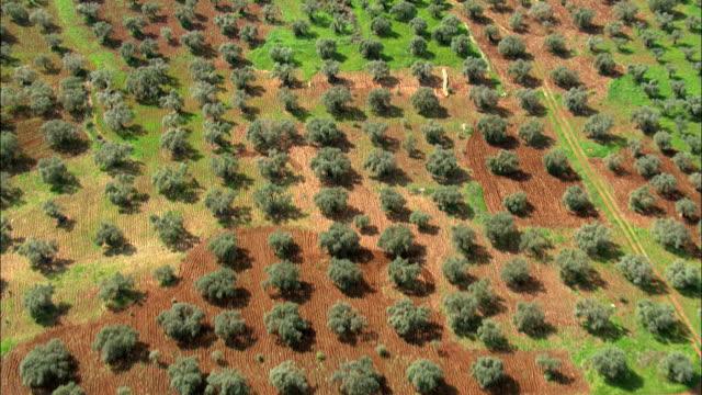 aerial an olive grove in the western galilee, israel - オリーブ油点の映像素材/bロール
