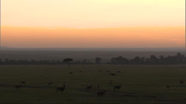 stockvideo's en b-roll-footage met aerial animals in african landscape at dawn or dusk, kenya, africa - donker beeld
