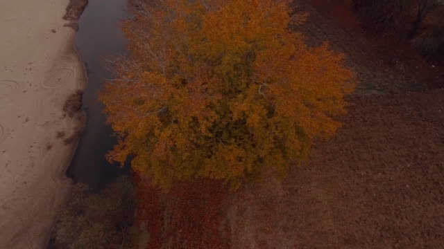 Aerial - Autumn - Trees, leaves and a river 3