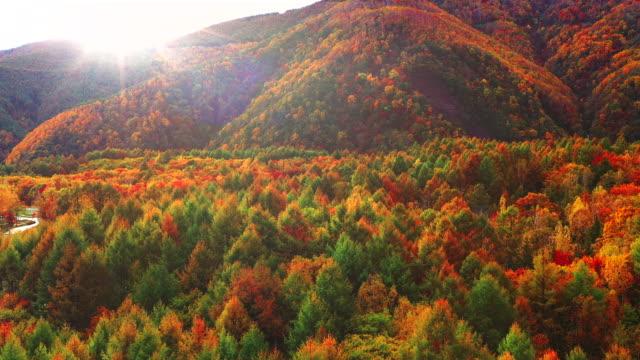 aerial autumn wild fall nature - establishing shot stock videos & royalty-free footage