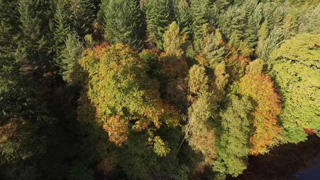 aerial: autumnal forest in bright sunshine  - perth, scotland - perthshire stock videos & royalty-free footage