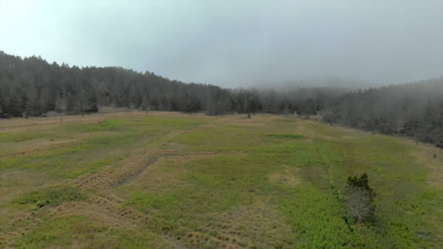 aerial backward: meadow among misty forest under cloudy sky - hispaniola stock videos & royalty-free footage