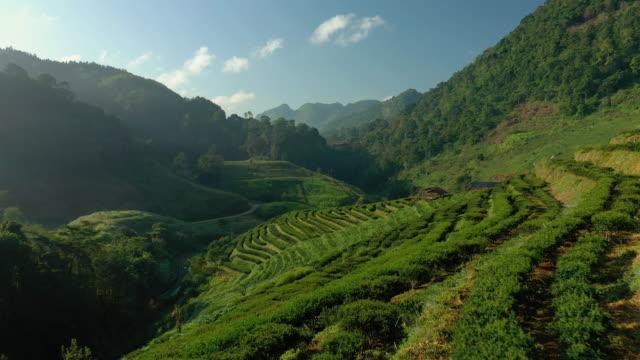 aerial backward of tea plantation terrace on mountain - aspetto naturale video stock e b–roll
