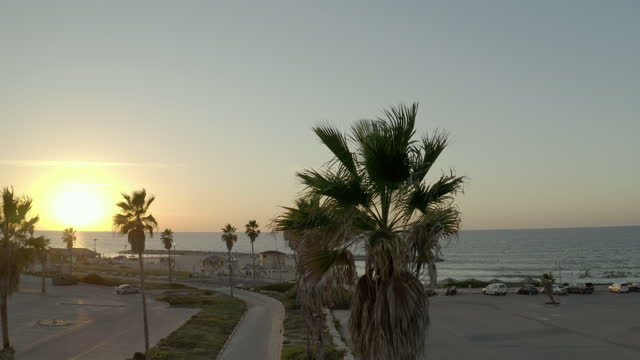 aerial backward shot of palm trees during sunset, drone flying over landscape - tel aviv, israel - aerial stock videos & royalty-free footage