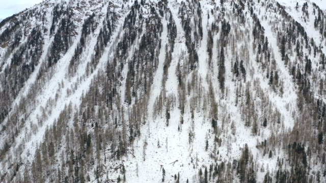 Aerial Backward: Side of a Snowy Mountain with Pine Forest in South Tyrol, Italy