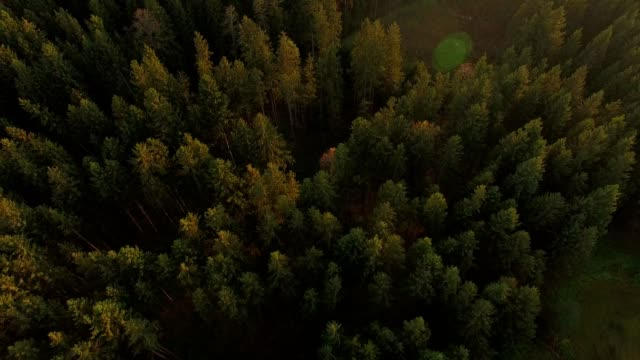 aerial: bavarian forest in autumn - pinaceae stock videos & royalty-free footage