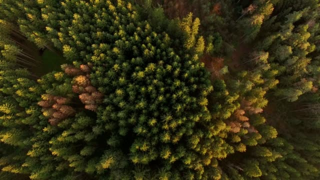 aerial: bavarian forest in autumn - austria video stock e b–roll