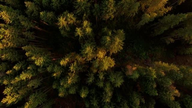 Aerial: Bavarian forest in autumn