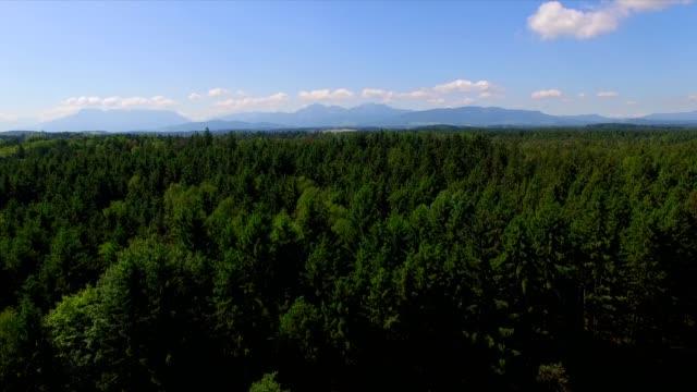 Aerial: Bavarian woods in summer