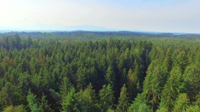 aerial: bavarian woods - east germany stock videos and b-roll footage
