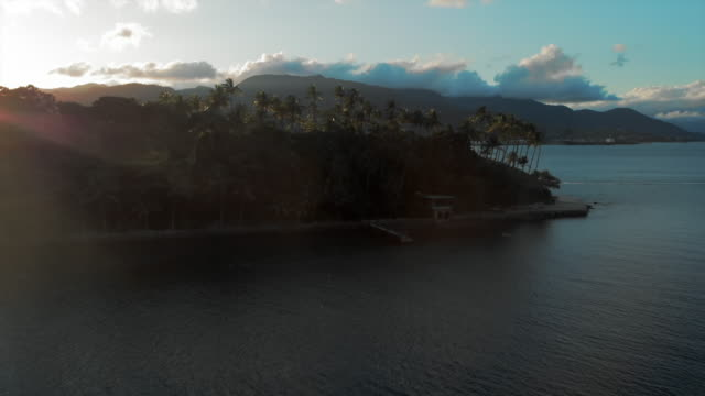 aerial: beautiful view of archipelago, jungle and palm trees during sunset in ilhabela, brazil - tropischer baum stock-videos und b-roll-filmmaterial