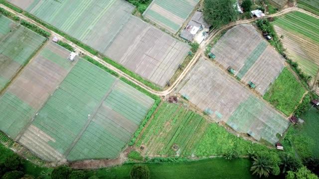 aerial birdseye view of a vegetable farm in johor bahru malaysia - johor stock videos & royalty-free footage