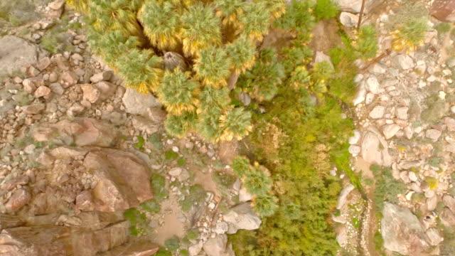 Aerial Kalifornien Desert Oasis