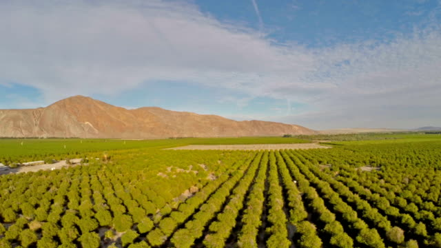 aerial california orange orchards - orchard stock videos and b-roll footage