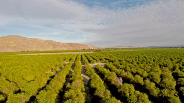 luftbild des kalifornischen orange orchards - wäldchen stock-videos und b-roll-filmmaterial