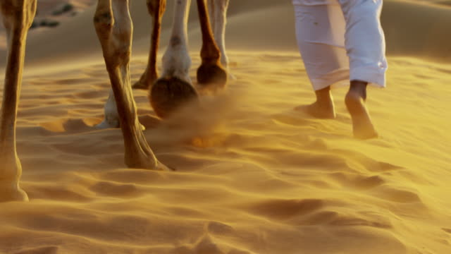 aerial camels being led by handlers across desert - ultra high definition television stock videos & royalty-free footage